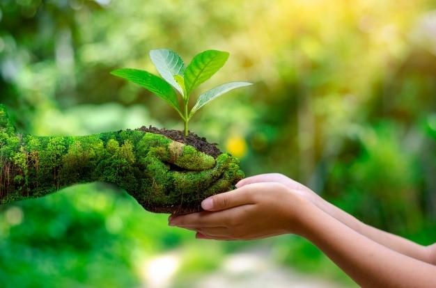 Hoy es el Día Mundial del Medio ambiente 🌳🌳🌳 8